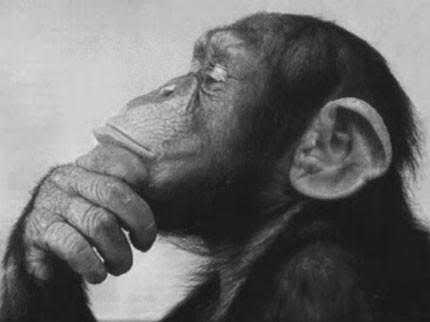 scimmiapensatrice